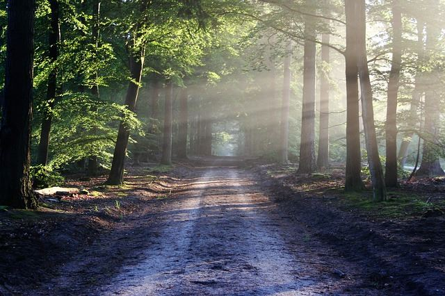 A soothing photo of a pathway into the woods.  Calming photo.