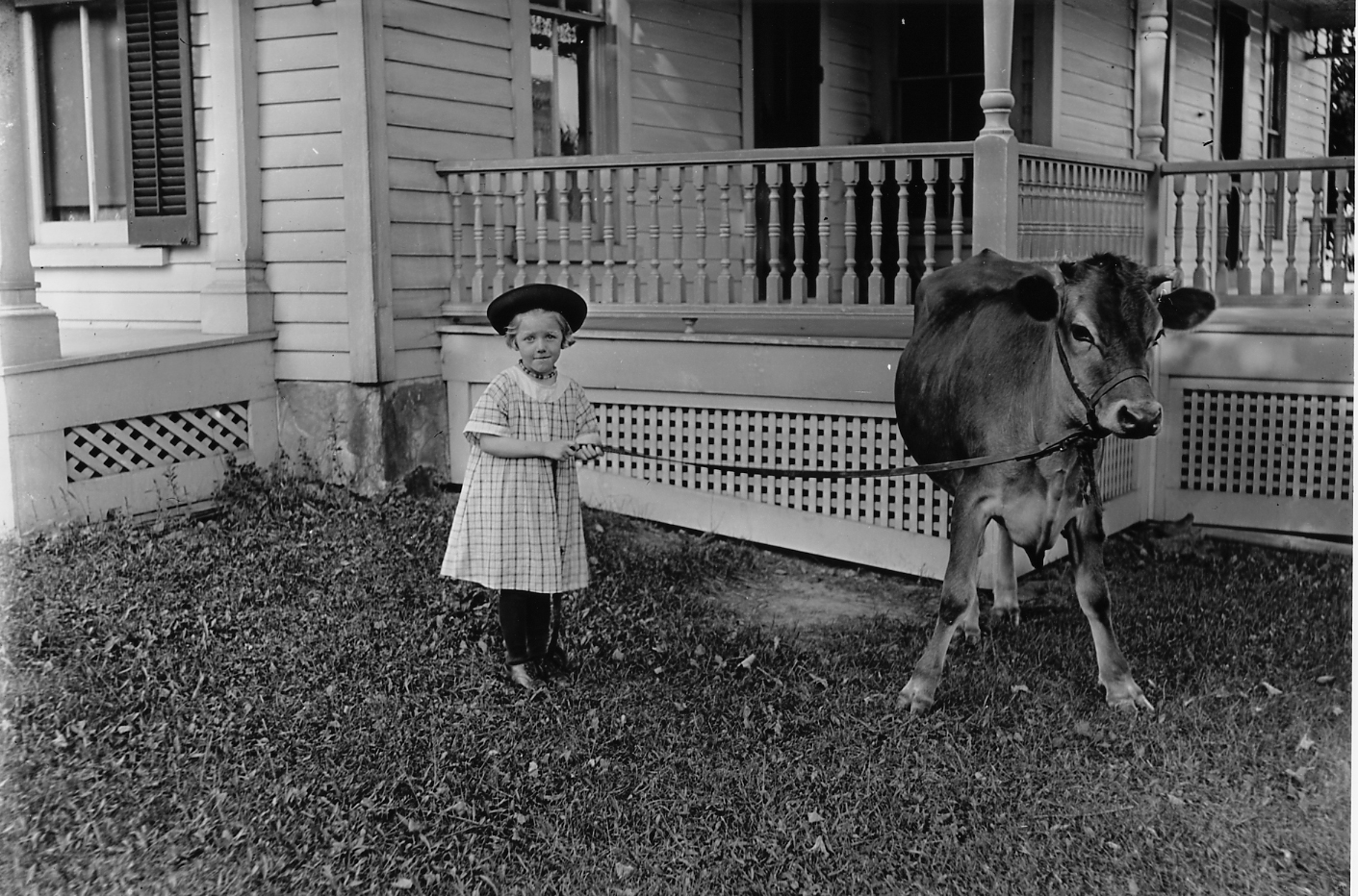 Image of little girl in a plaid dress holding leadline of calf, standing next to porch of a house